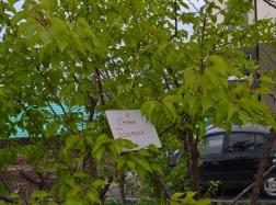 Гости мероприятия имели возможность высадить именные деревья