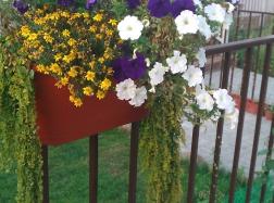 """Любителям цветов в """"Женеве"""" есть где развернуться!"""